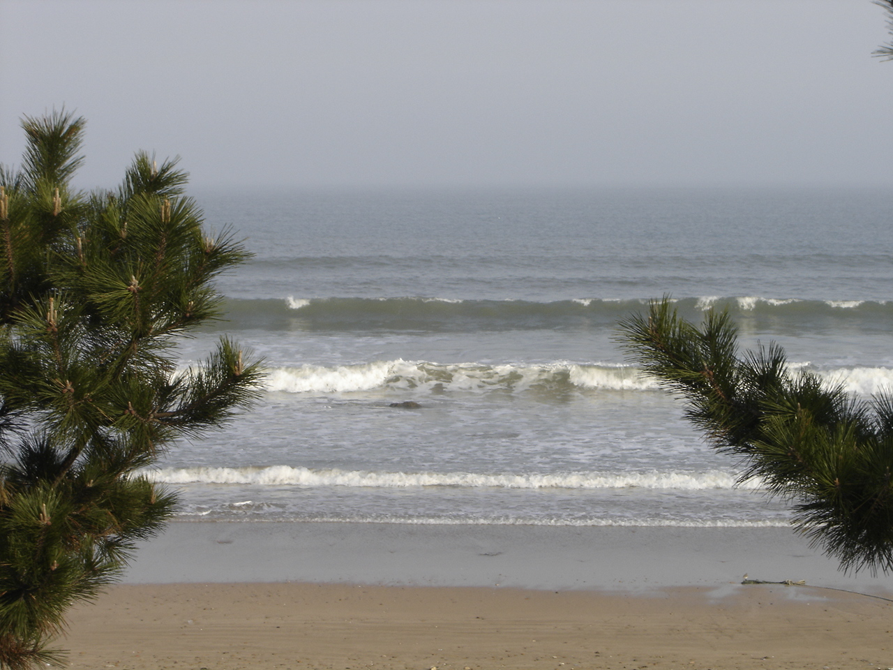 Ocean park 018