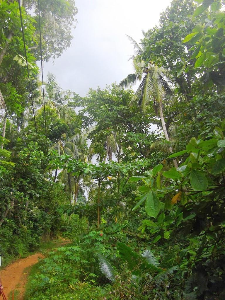 nature Mirissa