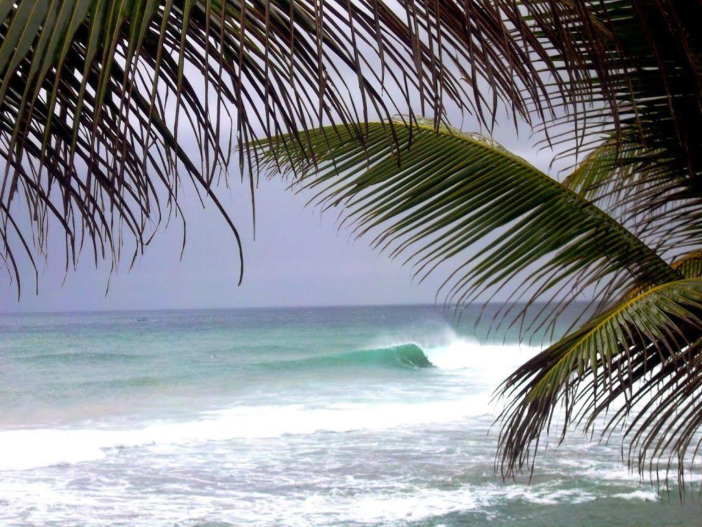 vagues et palmier