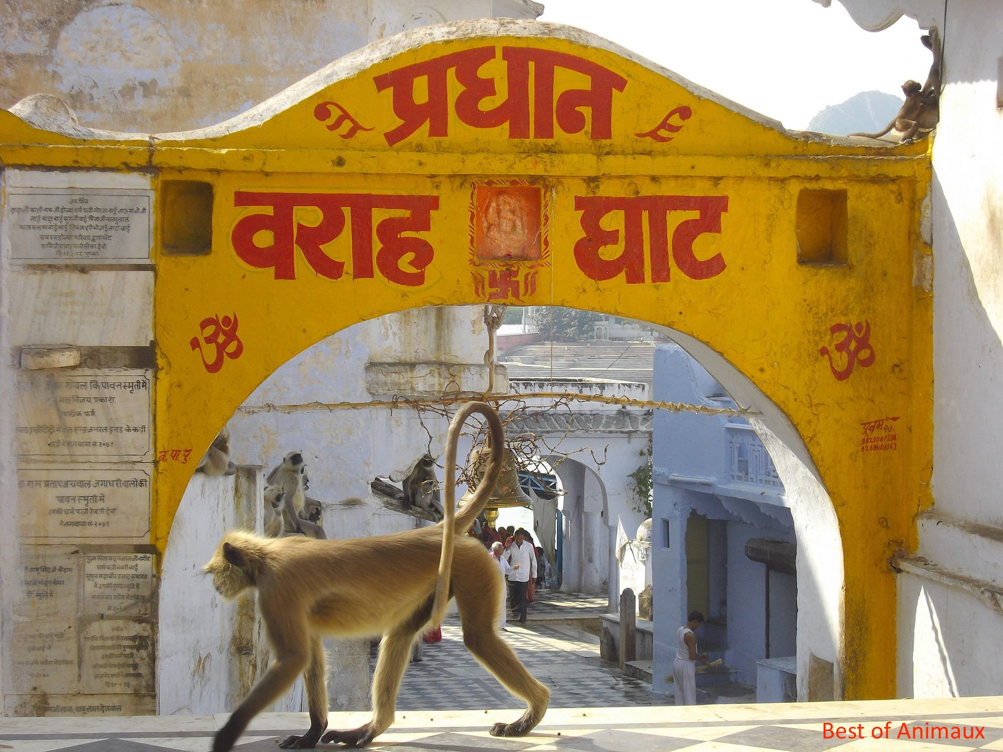 Best of Animaux rajasthan inde