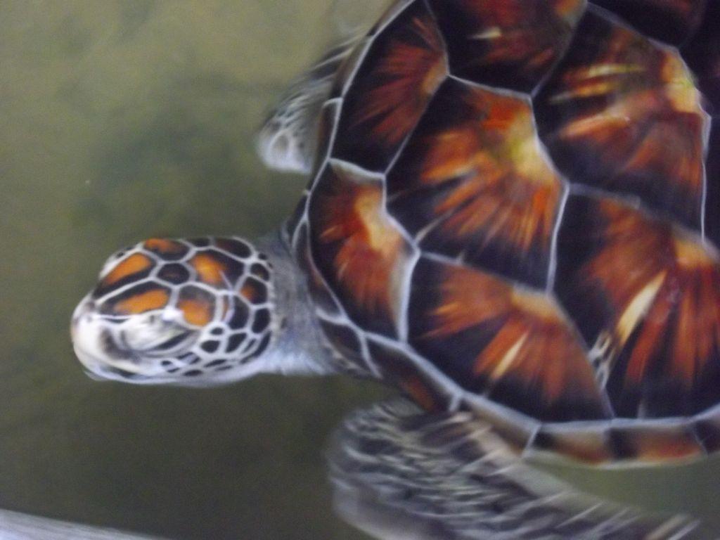 centre tortue bentota (2)