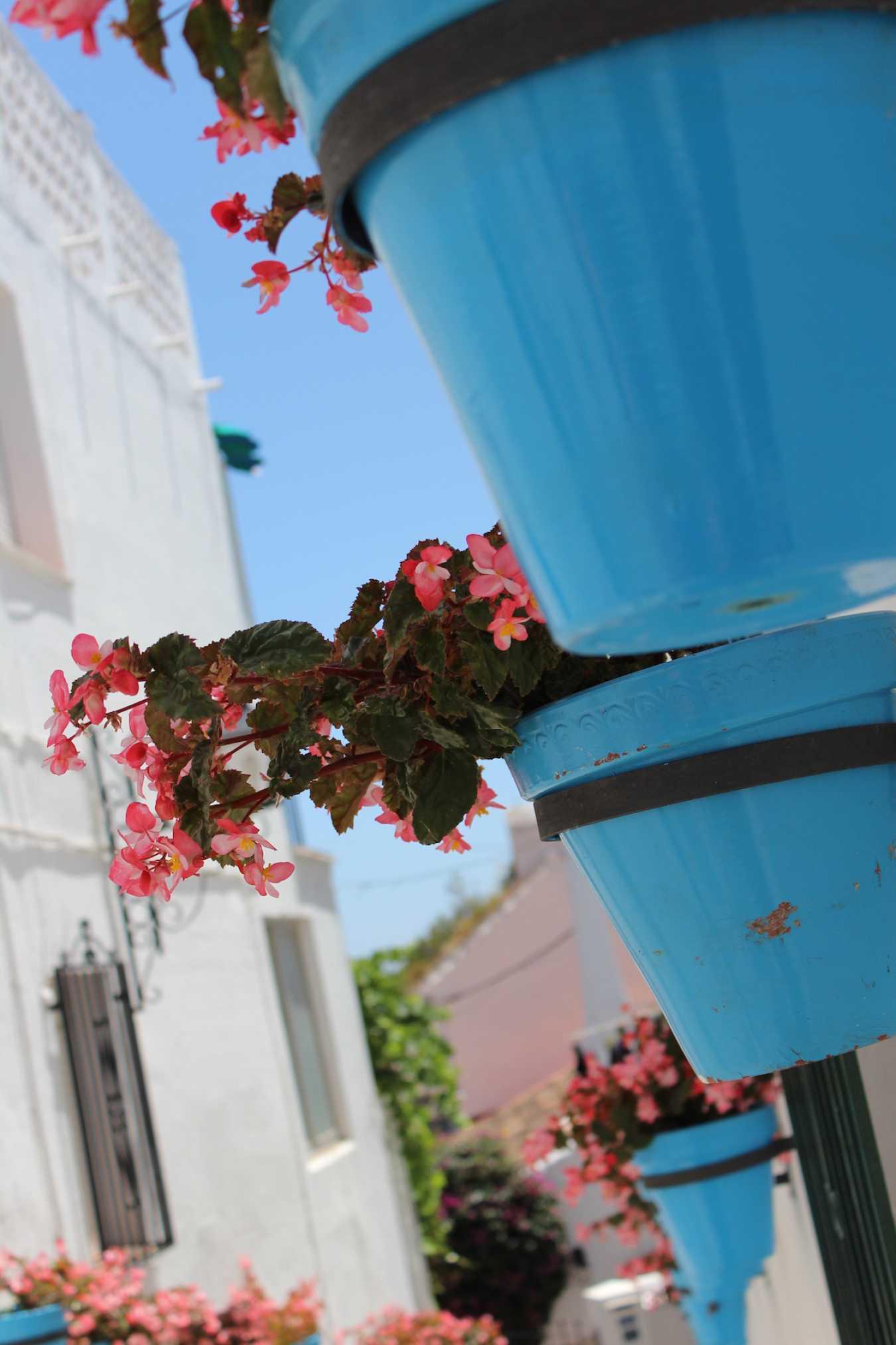 rue de mijas, espagne, andalousie, fleurs